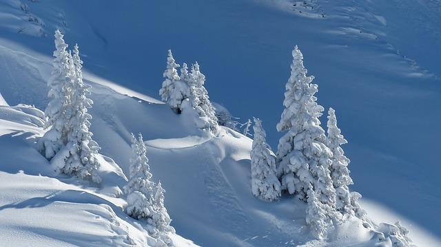 Picolé de pinheiro: Como os pinheiros resistem ao friointenso?