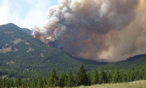 O fogo e a biodiversidade: os dois lados de uma mesmamoeda