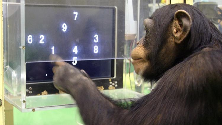 A evolução da linguagem e a continuidade mental entre animais não-humanos ehumanos
