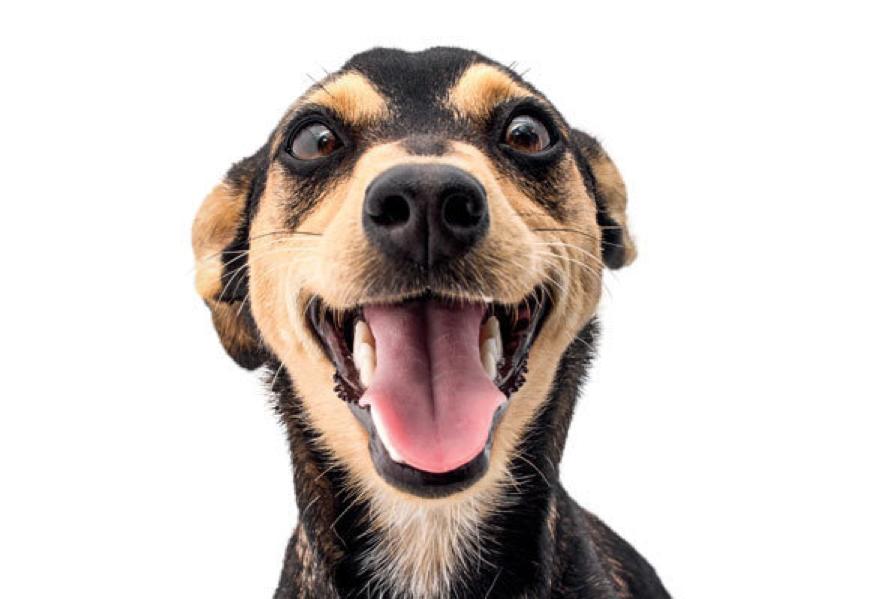 Sobre cães, humanos egenética