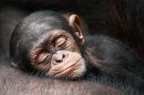 O sono dacivilização