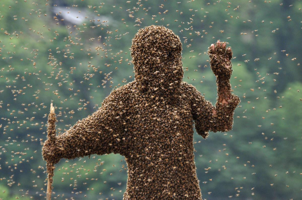 De humanos a formigas: o ínfimoinfinito