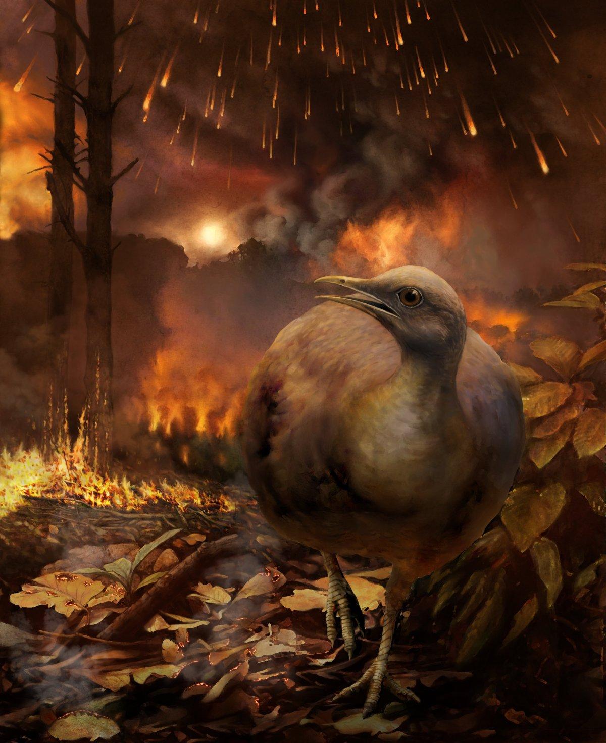 As aves sem árvores: sobrevivendo à extinção nochão