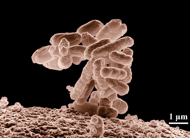 Os micróbios estão nocomando!
