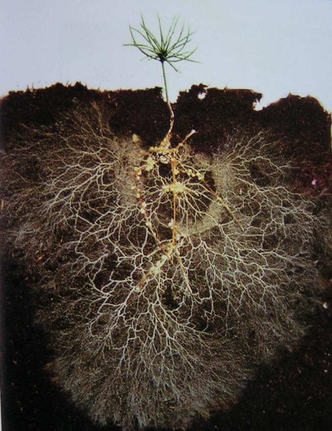 Explorando mais profundamente a diversidade biológicas dossolos