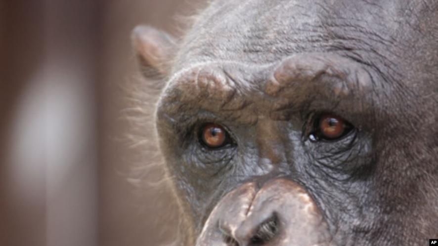 Animais não-humanos cometemsuicídio?
