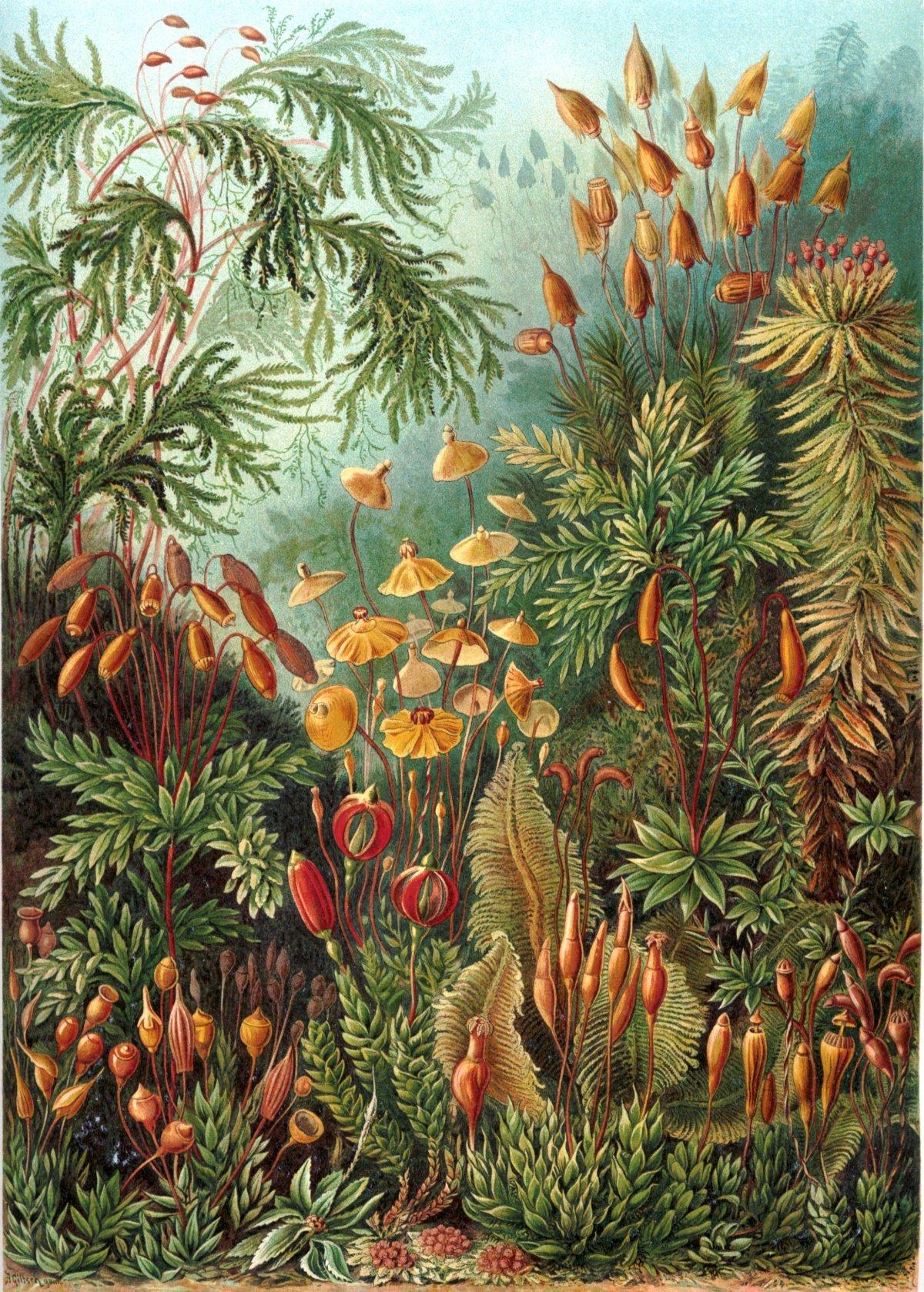 As plantas e os seus mil e umtranscriptomas