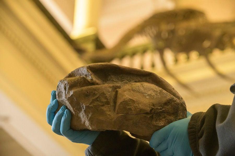 A Coisa: o fóssil misterioso daAntártica