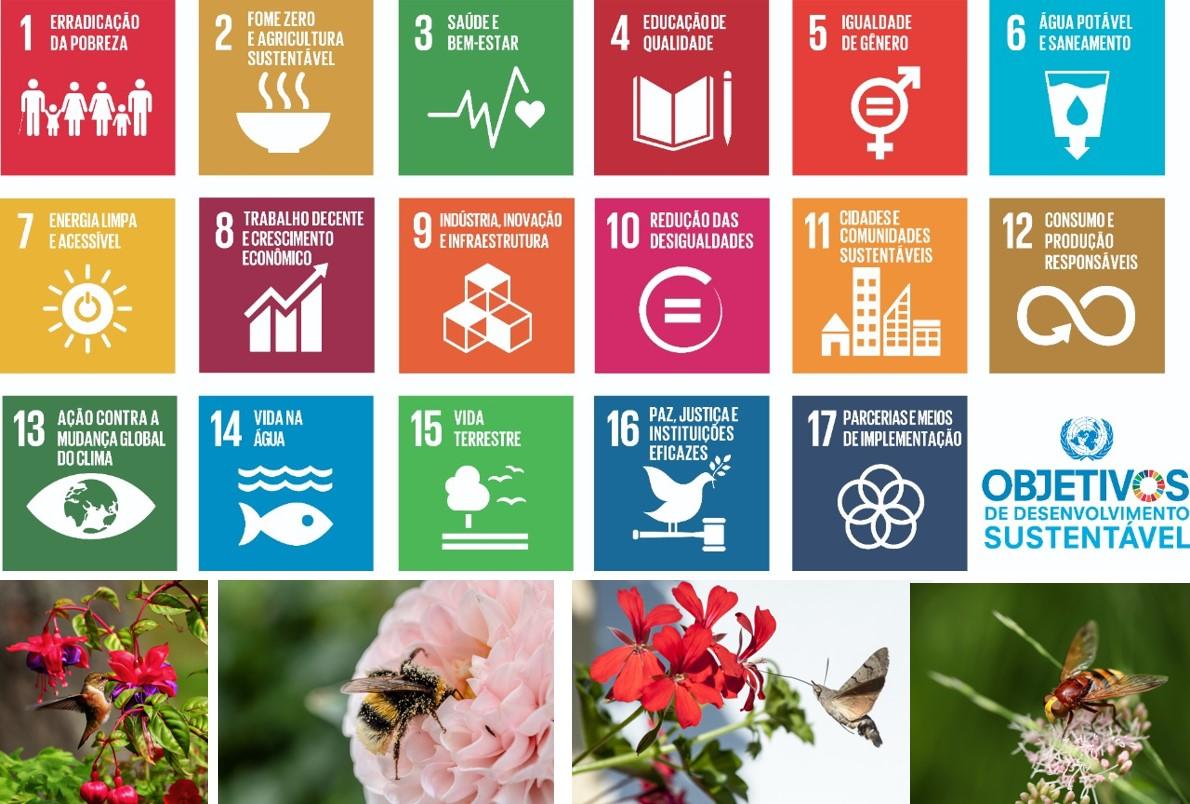 Proteção dos polinizadores e sustentabilidade: objetivos que secruzam