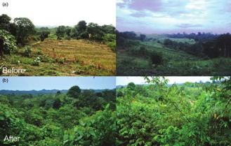 Você sabe o que é restauração ecológica e como ela pode nos ajudar a combater futuraspandemias?