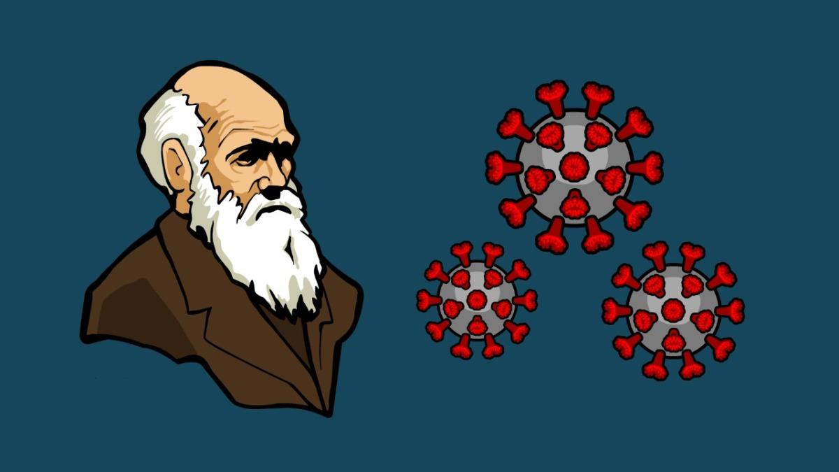 Com a evolução não sebrinca