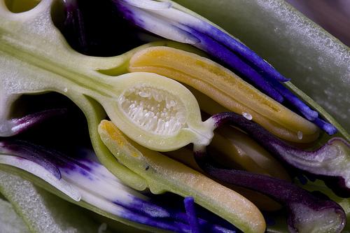 Fertilização em animais e plantas: as semelhanças são muito mais do que merascoincidências