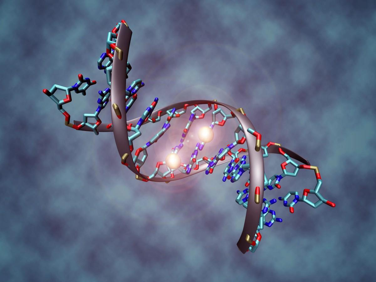 Por uma síntese evolutiva mais inclusiva: a Epigenética e a evolução dogenoma